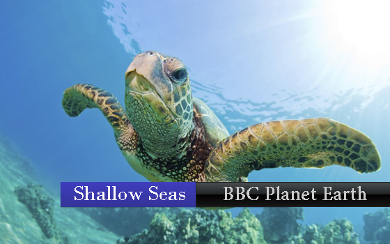 BBC - Planet earth - Shallow Seas