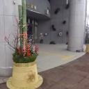 企業局の前の門松