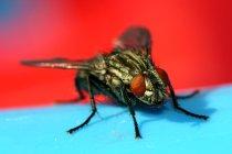 Get-rid-of-flies.jpg