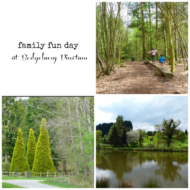 Pinetum Collage