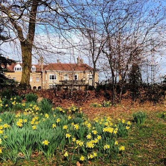 Spring flowers in Kent