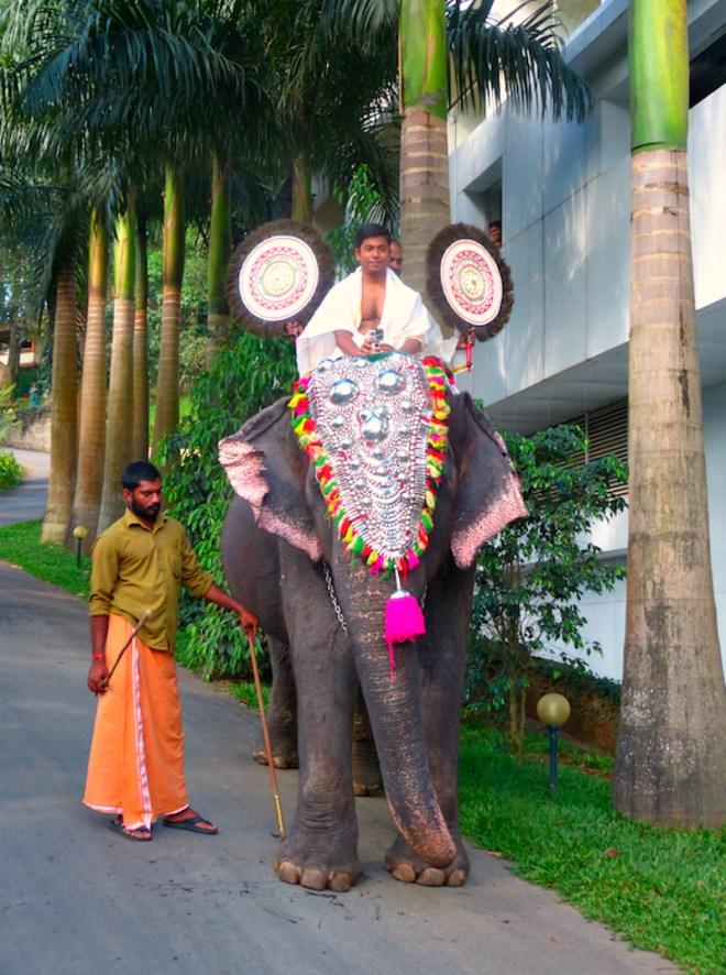 Elephant greetings