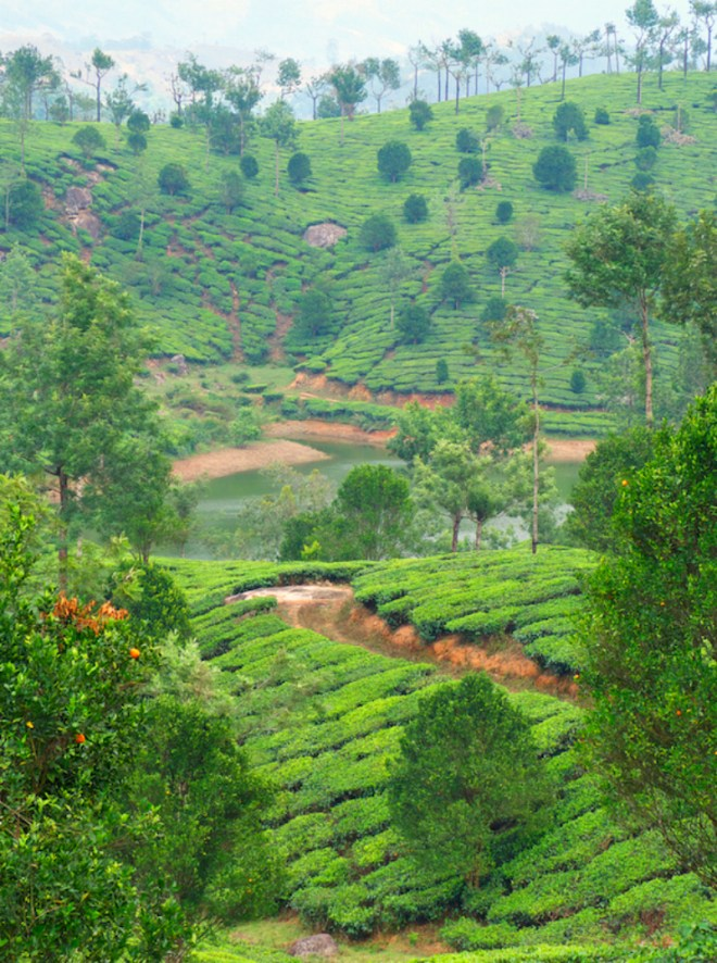 Tea country India