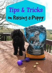 Tips and Tricks on Raising a Puppy