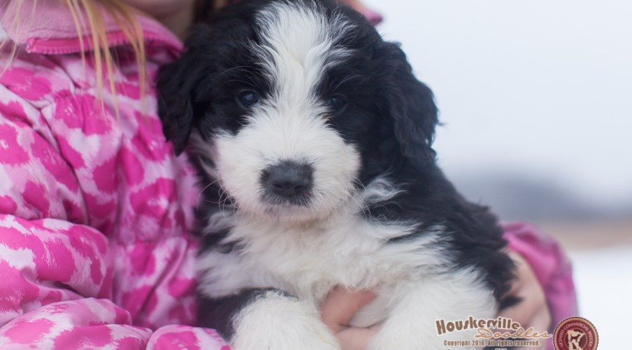 Candice - six weeks old