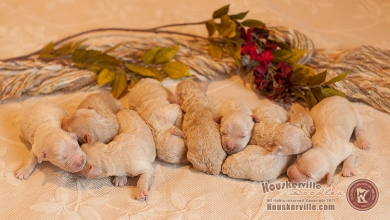 Litter of nine!