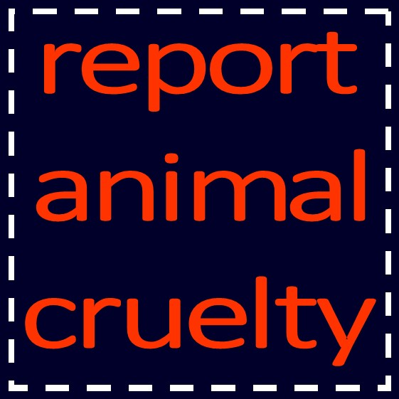 Image For Wait List Submission Houston Humane Society Pet Rescue Pet