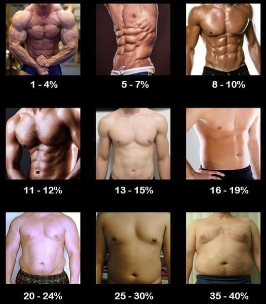 body fat women s chart - Canasbergdorfbib