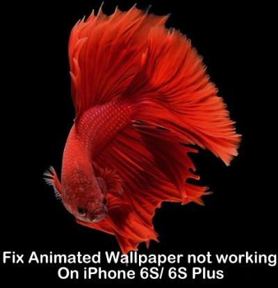 Fix Animated Wallpaper not working on iPhone X/8/8 Plus/ 7/ 7 Plus/ 6S+