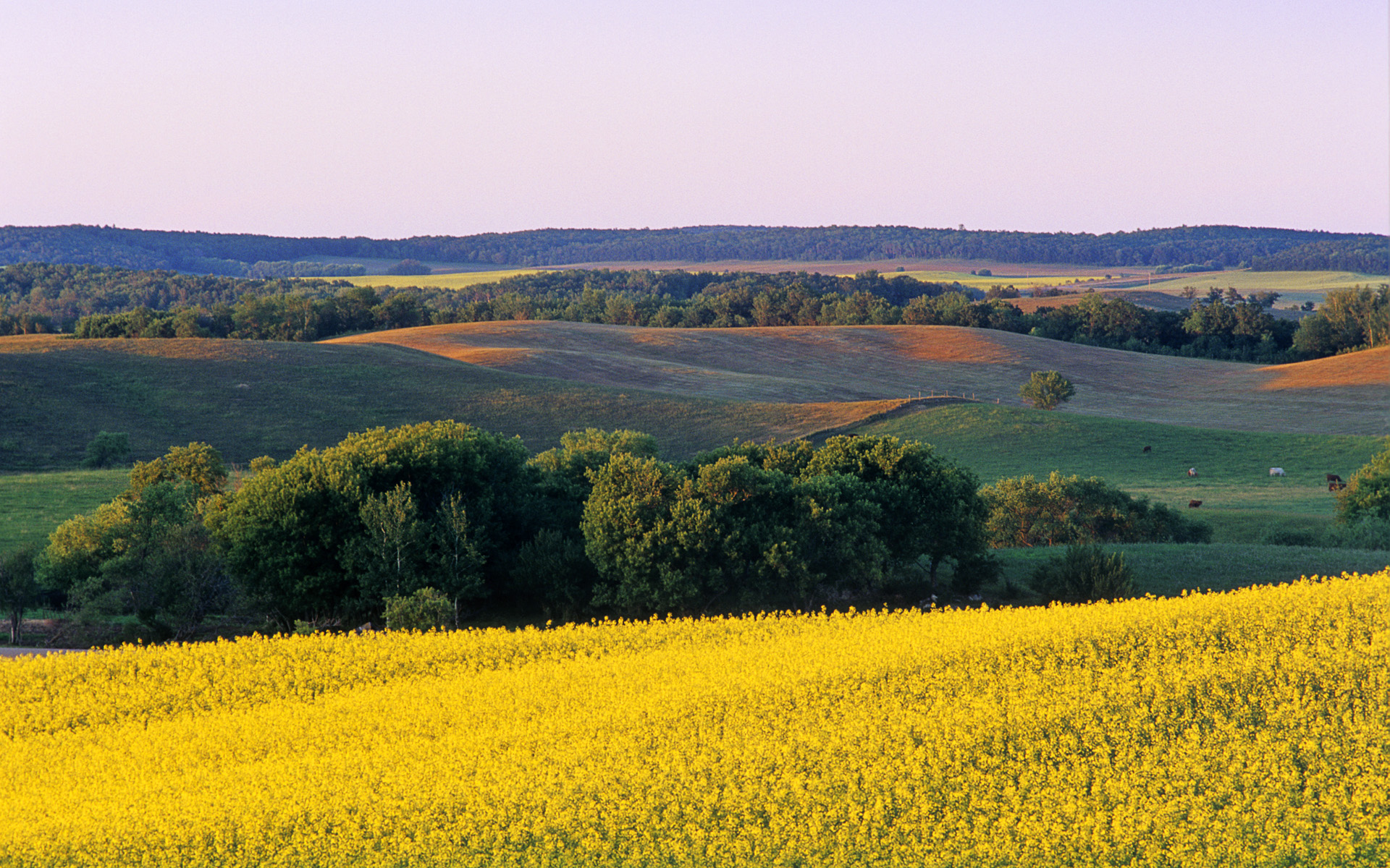 Hd Wallpapers For Ubuntu Farmland With Canola In Foreground Tiger Hills Manitoba