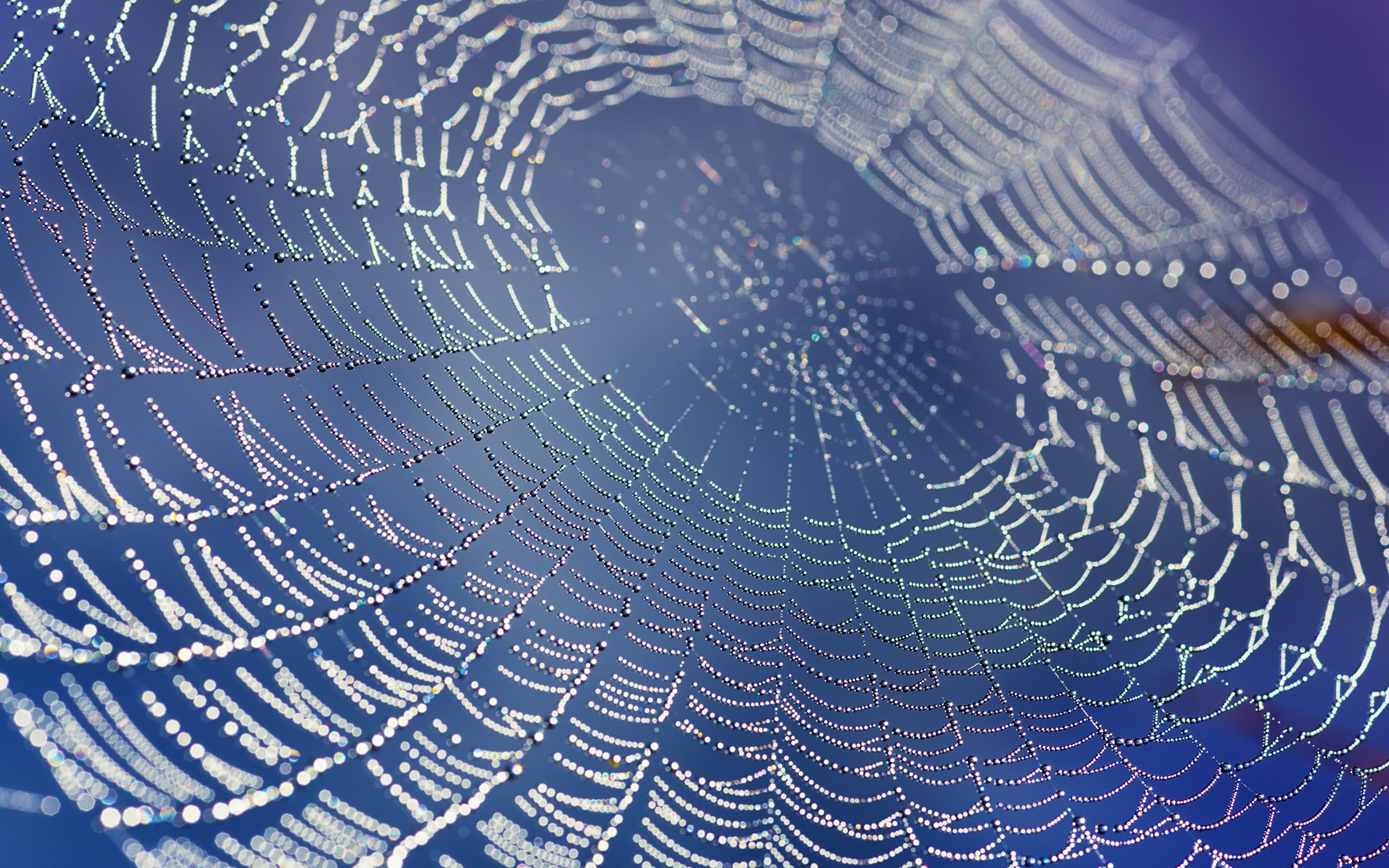 Spiderman Hd Wallpaper 17 Incredible Spiderweb Wallpapers With Water Drops And