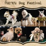 Dog Festival @ Plearnwan