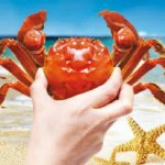 CRUSTACEANS & SWIMMERS At PALM TERRACE