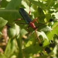 bicho raro, verde y rojo con antenas largas