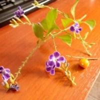 Duranta Erecta, una planta venenosa: CUIDADO!