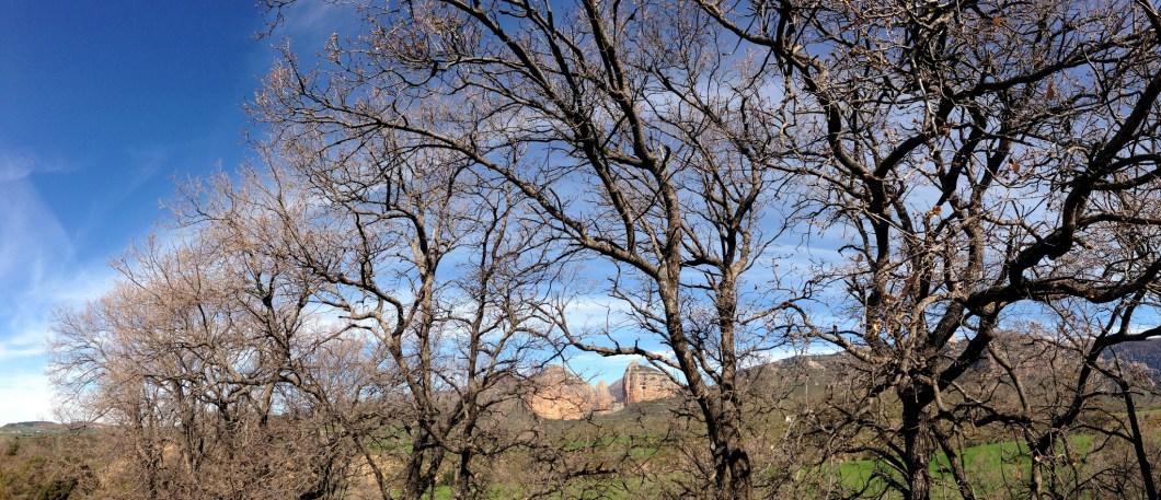Robledal de la Hoya de Huesca. Foto de Zierco