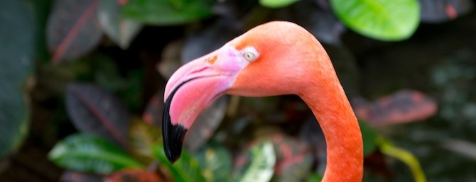 head of a flamingo