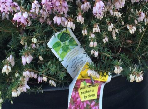 Image of neonicotinoid label on heather plant