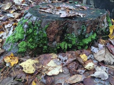 Image of moss on stump