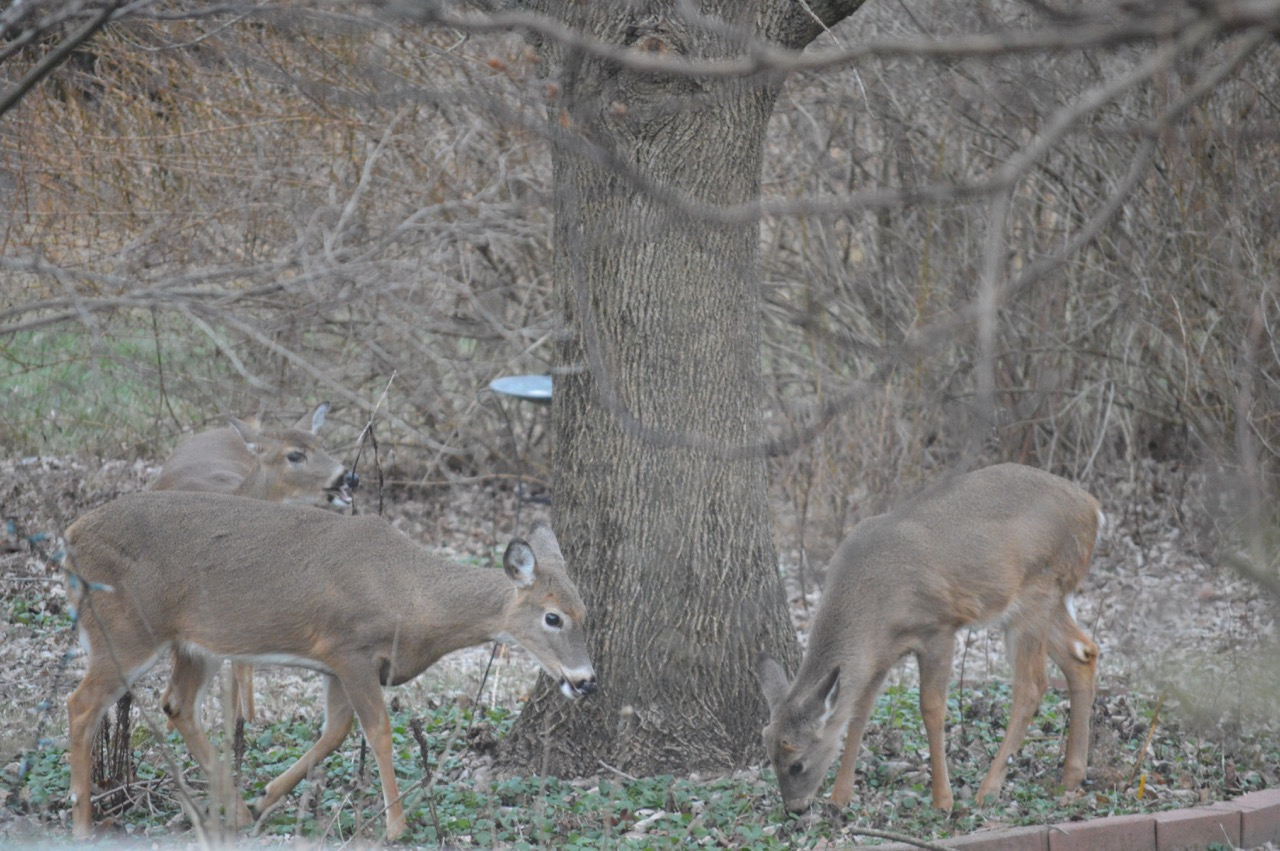 Give weeds and animals a chance humane gardener image of deer in garden sciox Images