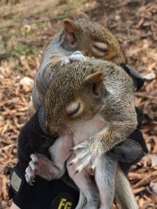 Image of squirrels orphaned by tree removal