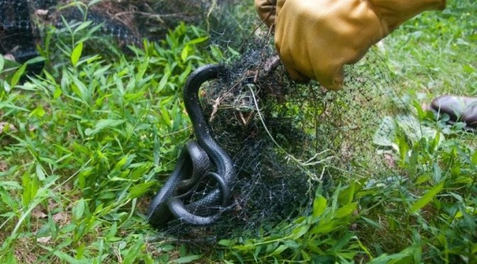 how to avoid snakes from entering house