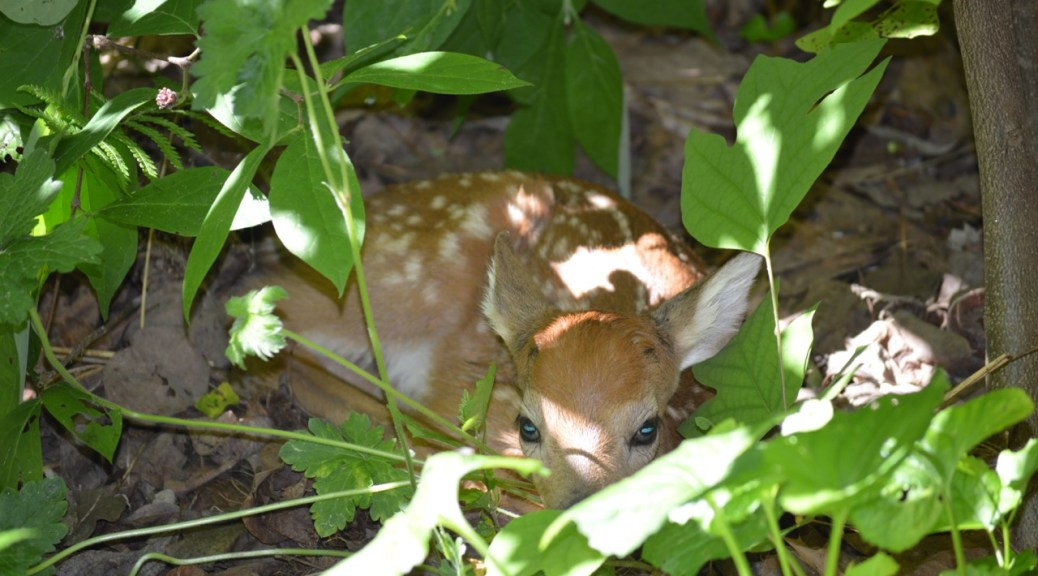 Image of baby deer by patio