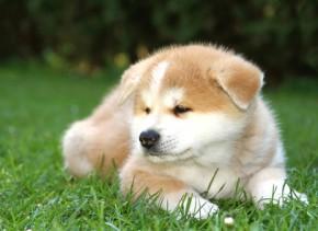 Rottweiler Fall Wallpaper Hunde Kaufen Amp Verkaufen Hundemarkt
