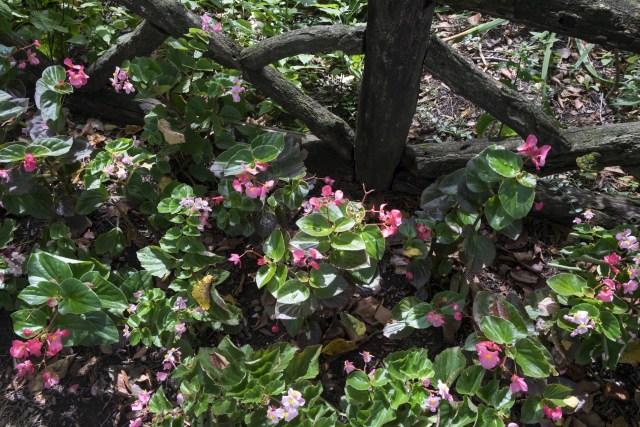 central-park-belvedere-castle-conservitory-garden-2585