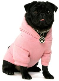 Dog Clothes and Pugs