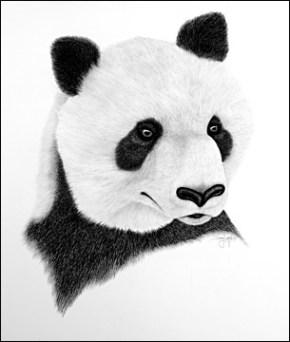 Искусные картины карандашом Vanishing Breeds