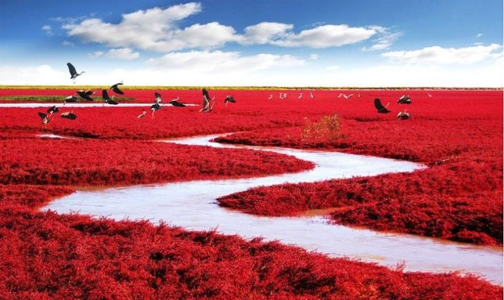 17- Red Beach (China)