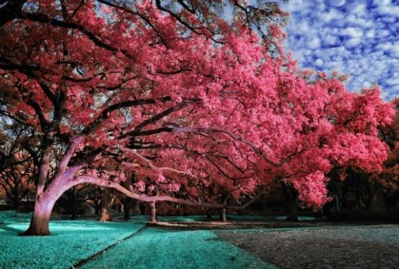 Infrared-Photography-14-600x406