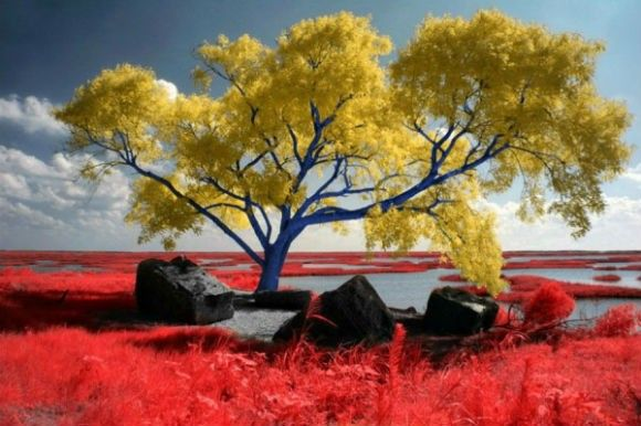 Infrared-Photography-2-600x399