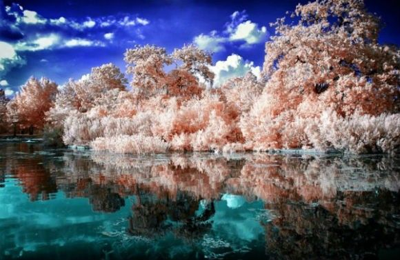 Infrared-Photography-28-600x390