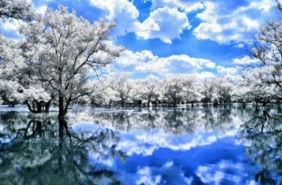 Infrared-Photography-29-600x394