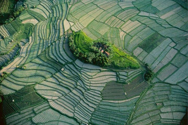 islet-in-the-terraced-rice-fields-of-bali-indonesia