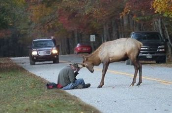 elk-photographer