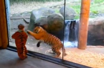 tiger-and-baby