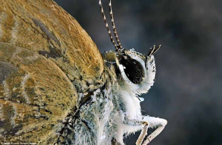 1404469008324_Image_galleryImage_These_insects_look_like_2