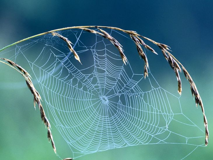 incy-wincy-spider-real-webmaster-spiders-pictures