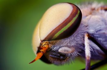 nature-eyes-animals-insects-wildlife-fly-macro-1920x1200-hd-wallpaper