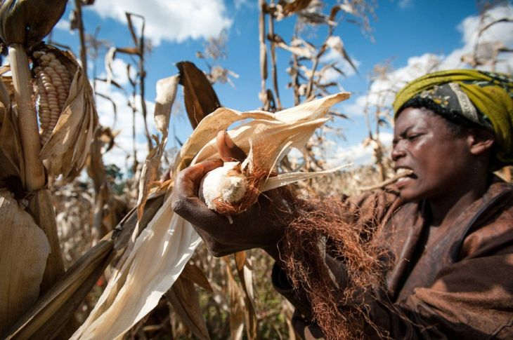 third-prize-this-woman-helps-harvest-on-a-farm-in-tanzania-the-farm-is-partly-funded-by-the-one-acre-fund-which-helps-small-farmers-grow-their-way-out-of-poverty-with-training-and-financing