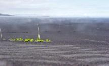 Black lava sand, steaming from moisture under the warm sun (SB)