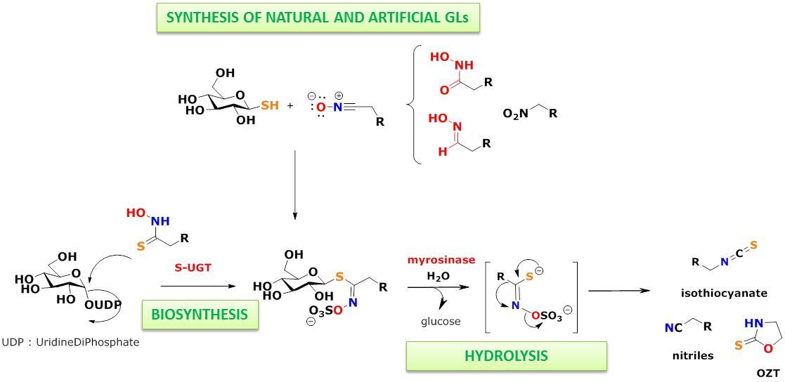 Secondary metabolites Glucosinolates Institute of Organic and