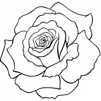 Rose Petals Outline Sketch Floral Wall Art Wall Sticker