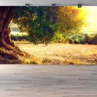 Olive Tree Wall Mural Sunset Landscape Photo Wallpaper ...