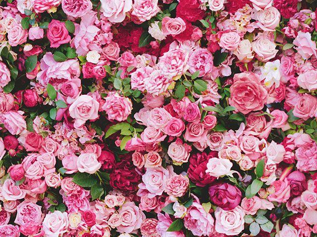 Christian Fall Desktop Wallpaper Flower Wall Rentals Wedding Decor