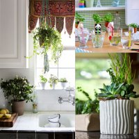 7 Tips:Freshen kitchen space with plants Slide 1, ifairer.com