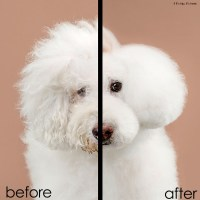 Grace Chon Proves Even Dogs Can Have Good Hair Days